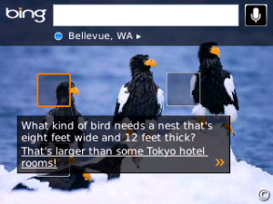 Bing for BlackBerry Playbook
